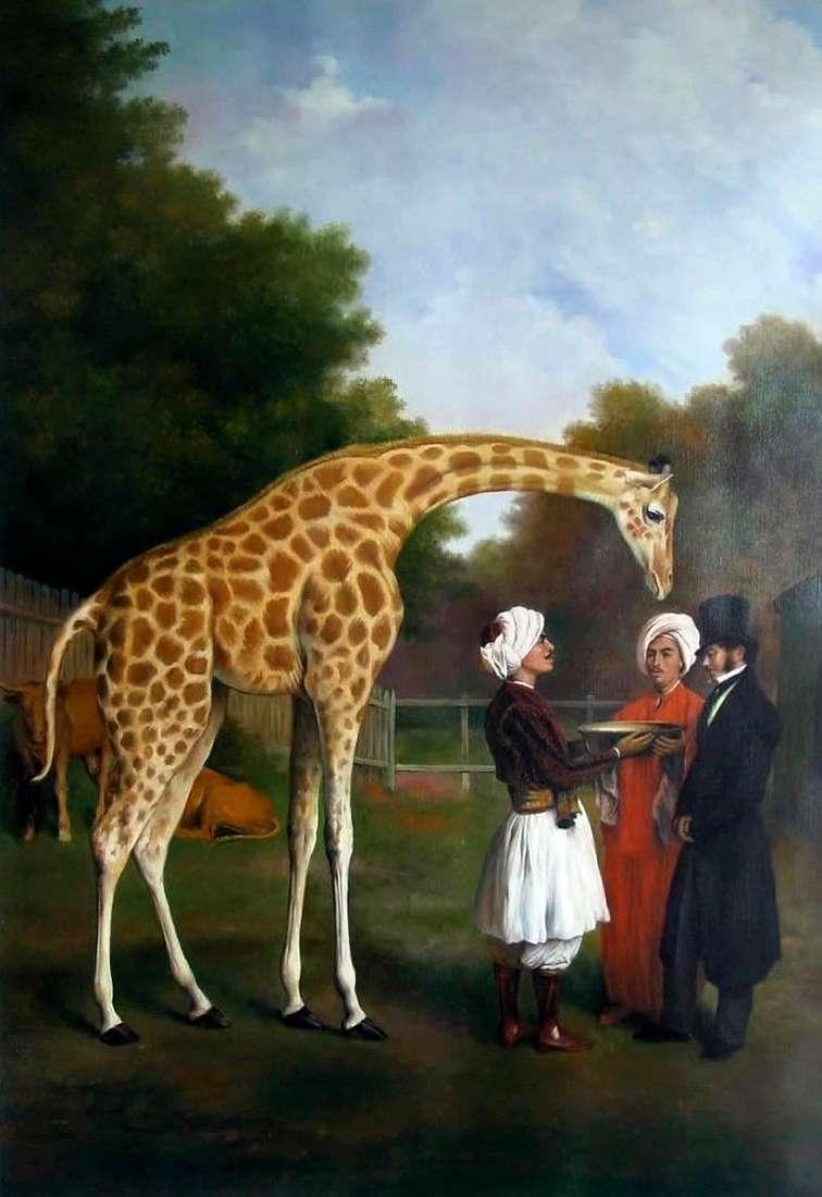 Nubian giraffe by Jacques Laurent Agass&eacute