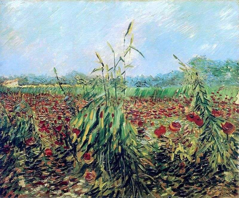 Green wheat ears by Vincent Van Gogh