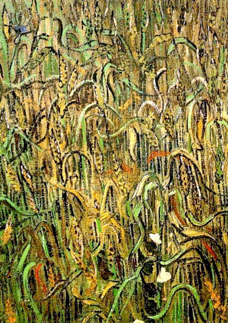 Wheat ears by Vincent Van Gogh
