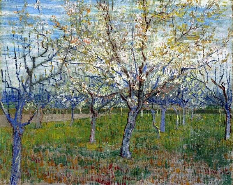 Orchard with flowering apricots by Vincent Van Gogh