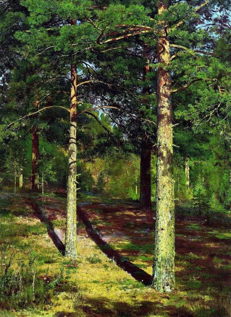 Pines, illuminated by the sun by Ivan Shishkin