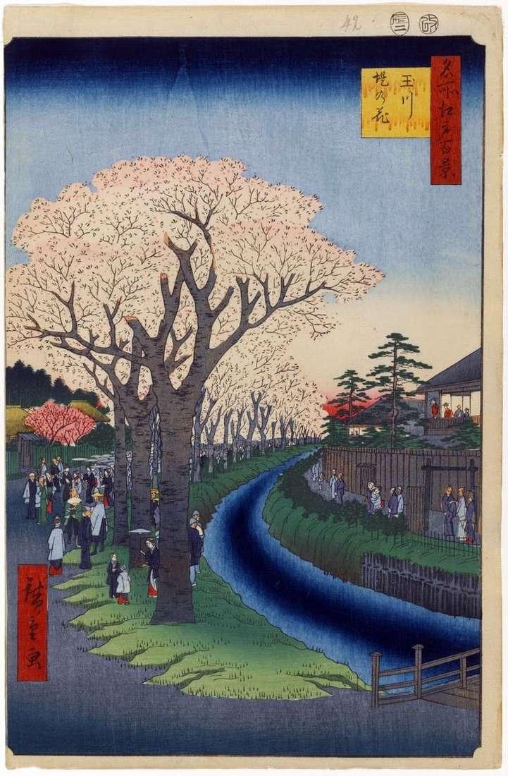 Árboles de Sakura a lo largo de la presa del río Tamagawa   Utagawa Hiroshige