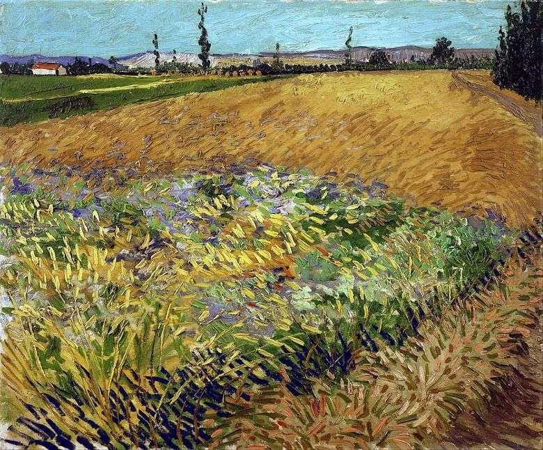 Campo de trigo y antiguas estribaciones de los Alpes en el fondo   Vincent van Gogh
